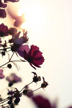 Beautiful light on burgundy flowers