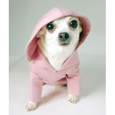 Cute little thing in a hoody. Bench makes cute hoodies for humans.