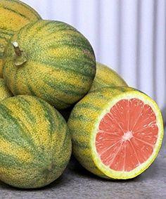 Exotic Fruit, Tropical Fruits, Citrus Fruits, Unique Plants, Exotic Plants, Citrus Trees, Fruit Trees, Fruit And Veg, Fruits And Veggies