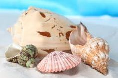 conchas y estrellas de mar - Buscar con Google