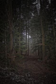 German Forest, 2013
