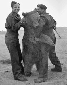 20 Images of Corporal Wojtek, the Polish Bear and Hero of WWII. Wojtek Bear, Poland Ww2, My Heritage, Military History, World History, Brown Bear, World War Two, Armed Forces, Historical Photos