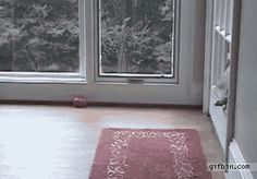 This dog who refused to go through the other door, making his kids embarrassed every.time. | The 40 Most Awkward Dogs Of 2013