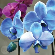 There are many different colored orchids available at our shop with carry-out specials!