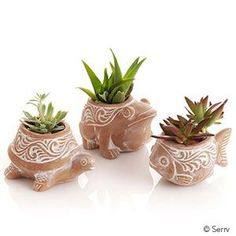 Porch & Decor - Pond Critter Planters