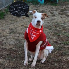 A dog's Christmas wish: a home after spending 10 years living in kennel. Help find her a home!