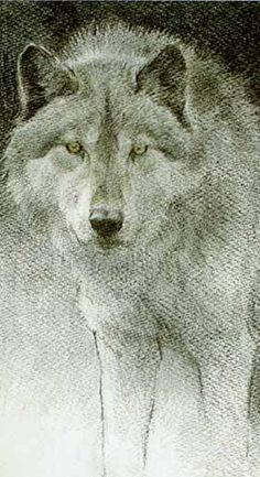 Wolf Sketch- Bateman, Signed by the Artist – PaperLithograph – Limited Edition – 950S/N – 8 5/8x11 5/8 – | National Wildlife