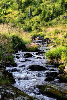 Hamersky potok in Sumava Mountains - Czech Republic Magical Forest, Fairy Land, Mountain Range, Czech Republic, Rivers, Beautiful World, Lakes, Pools, Beautiful Pictures
