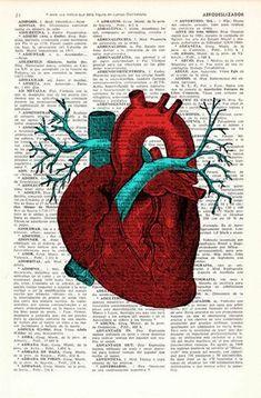 Arte de pared del corazón humano Anatomía estudio de por PRRINT