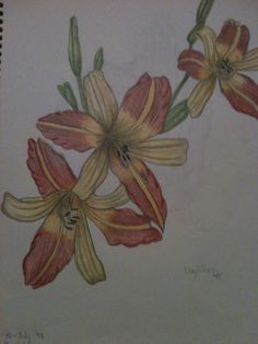 Day lilies in watercolour pencil By Jeanne Tyrrell