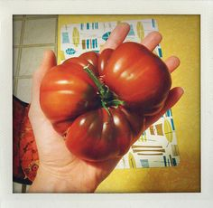 Growing tomatoes in the Pacific NW