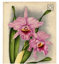 Bellas orquídeas