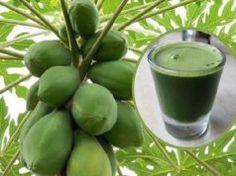 Conoce jugo de hojas de papaya para desintoxicar y revertir el hígado graso.