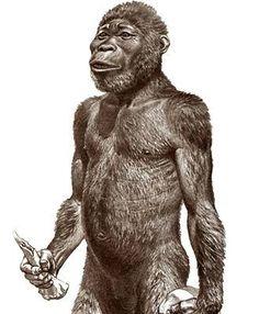 Australopithecus africanus [af-ri-kah-nuhs, -kan-uhs] Word Origin noun an extinct species of graci Prehistoric World, Prehistoric Creatures, Hominid Species, Cultura General, Early Humans, Human Evolution, Art Folder, Extinct Animals, Historical Pictures