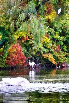 Egrets chilling