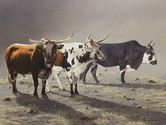 Cattle painting by Rob Macintosh Wildlife Paintings, Animal Paintings, Animal Drawings, Cow Painting, Watercolor Paintings, Rind, Cow Art, South African Artists, Human Art