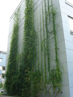 Green Wall Systems Gallery