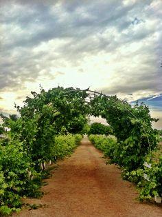 Agritopia Farm. Gilbert, Arizona