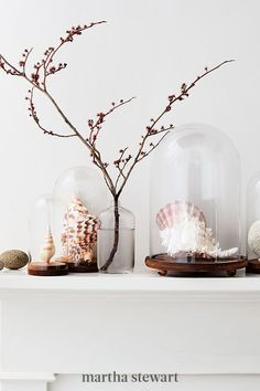 To display sand dollars, conchs, and coral like the treasures they are, set them under glass cloches (these are from IKEA and Jamali Garden). To prop up a specimen, use a three-inch acrylic easel. #marthastewart #crafts #diyideas #easycrafts #tutorials #hobby