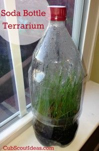 How to Make a Terrarium Out of a Soda Bottle - Cub Scout Ideas