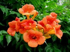 # Flowers Bright Orange Hd Flowers, Orange Flowers, Desktop Windows, Orange Wallpaper, Furniture Makeover, Wallpaper Backgrounds, Hair Beauty, Bright, Rose