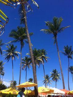 Coqueiros! Praia do Flamengo - Bahia