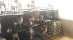 Petitioning Illinois General Assembly and 3 others Illinois Puppy Mill Cruelty Prevention Act
