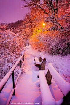 The Beauty in Winter