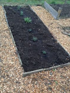 Herb bed started - front to back: Bergamot, Silver Thyme, Peppermint, Oregano, Sage, Rosemary