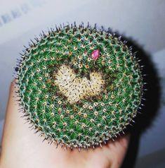 🌵Love is everywhere 🌵 Flower Art, Dandelion, Greece, Cactus, Succulents, Love, Flowers, Plants, Instagram
