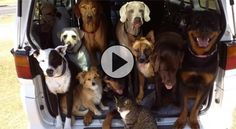 GONE VIRAL: A truckload of dogs has the time of their life at the beach!