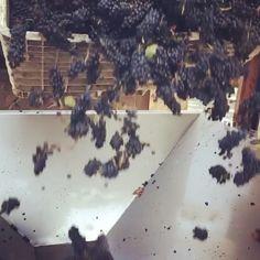 The wonders of winemaking, courtesy of Truchard  Vineyards, our guest vineyard at Saturday's Winemaker's Dinner! RSVP now. #Wine #WineLover #TruchardVineyards