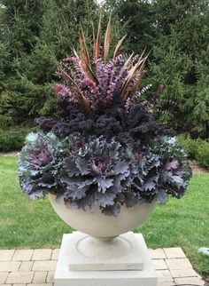 3 Easy Container Gardening Tips Full Sun Container Plants, Evergreen Container, Container Flowers, Fall Container Gardening, Indoor Gardening Supplies, Fall Containers, Succulent Containers, Pot Jardin, Fall Planters