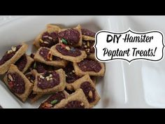 ▶ DIY Hamster Poptart Treats - YouTube