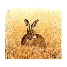 Brown Hare (watercolour)