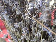 How to dry lavender flowers...  I have a huge plant that has produced 20+ stalks of flowers, and the flowers are just starting to open up!