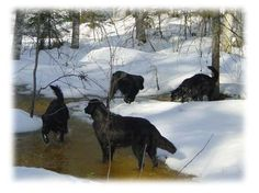 Spring is coming, snow is melting. Dogs enjoying.