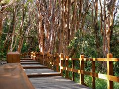Bosque de Arrayanes, Bariloche - Argentina