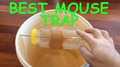 Best Mouse Trap Ever - Mice Trap Catches dozens of mice alive without ha. Best Mouse Trap Ever - Mice Trap Catches dozens of mice alive Mouse Trap Diy, Best Mouse Trap, Mouse Bait, Best Pest Control, Bug Control, Mouse Traps That Work, Homemade Mouse Traps, Bucket Mouse Trap, Mouse Trap Board Game