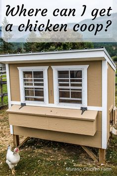 Backyard Chicken Coop Plans, Small Chicken Coops, Best Chicken Coop, Chicken Chick, Chicken Humor, Building A Chicken Coop, Chickens Backyard, Pet Chickens, Raising Chickens