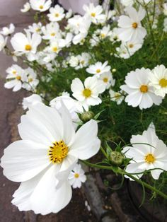 Drought Tolerant Plants - 101 Guide - All you need to know about drought tolerant plants AND how to train plants to be drought tolerant.