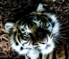 fractal tiger wallpaper | ... My Eyes (Gorgeous Fractal Tiger) - tiger, fractal, beautiful, animal