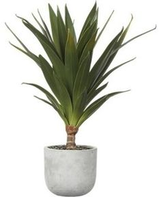 Contemporary Indoor Plants plants on plants on plants | aloe, plants and college room