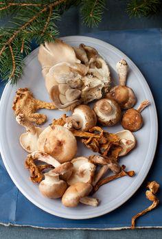 mushrooms display - Yelena Strokin ~