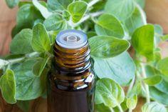Oregano zählt zu den kraftvollsten Kräutern und den wirkungsvollsten natürlichen Antibiotika, die jemals untersucht wurden