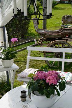 .My little tea garden