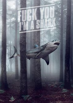 Ocean sharks are bad enough! Potty-mouthed air sharks in the forest are TERRIFYING!