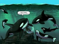 Note to seaworld! How would u like it if we kept you in a bathtub and made you do tricks?! #freethesea #emptythetanks!