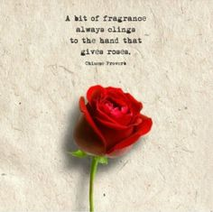 23 Rose Quotes Words And Quotes Quotes Rose Quotes Flowers