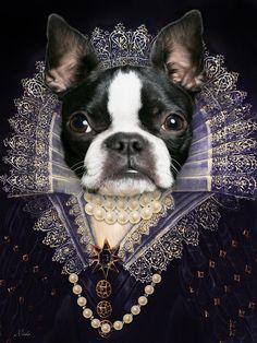 Yes, Your Highness. Photo Portrait, Portrait Images, Portraits From Photos, Dog Portraits, Boston Terrier Rescue, Boston Terrier Love, Boston Terriers, Portrait Renaissance, Jolie Photo